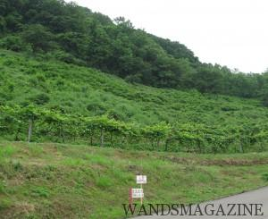 新潟県上越市にある岩の原葡萄園